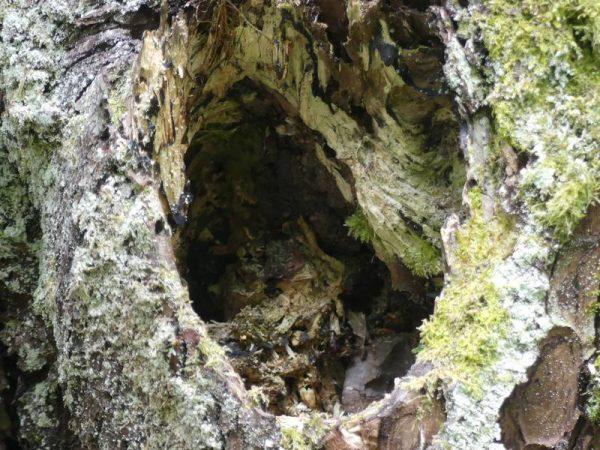 arbre-mort-ecorce-tronc_03