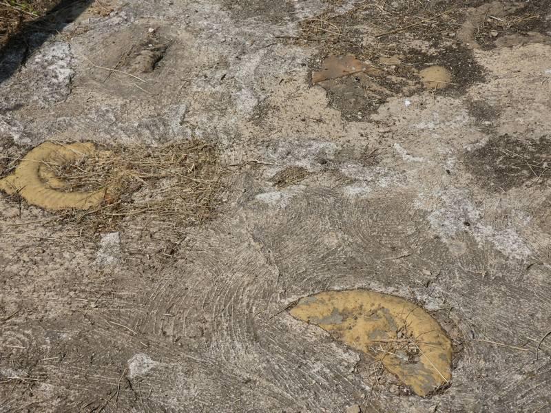 sortie-nature-geologie-hettange-grande_ 08